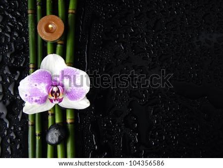 Spa still life on wet black background - stock photo
