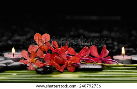 Spa still life with beautiful red orchid and candle.stones, and bamboo grove - stock photo