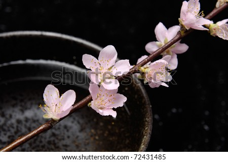 Spa still life with branch of pink cherry blossom in bowl - stock photo