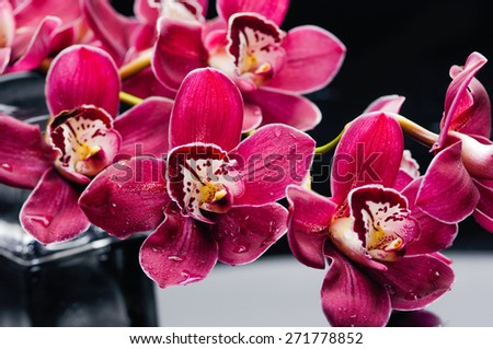 Spa still life with flowering branch of the red gorgeous orchid - stock photo