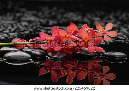 Spa still life with flowering branch of the red orchid   - stock photo
