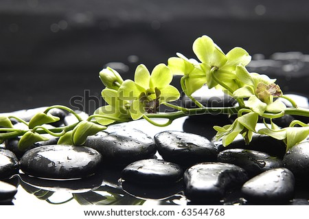 Spa still life with green orchid on pebble in water drops - stock photo