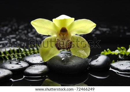 Spa still life with orchid with green fern on zen stones - stock photo