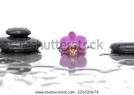 Spa still life with pink orchid with wet stones