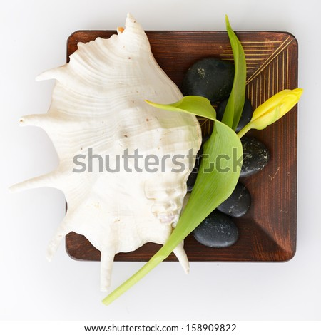 spa still life with tulip, stones and sea shell on wooden bowl over white background - stock photo