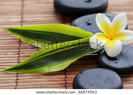 Spa still life with zen stones,frangipani flower and green leaves - stock photo