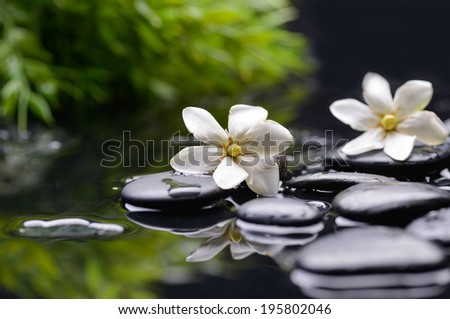 Spa still with gardenia flower and green plant on pebbles  - stock photo