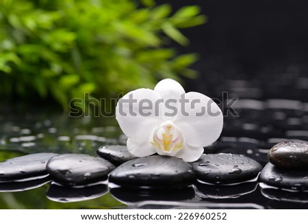 Spa still with white orchid on pebbles