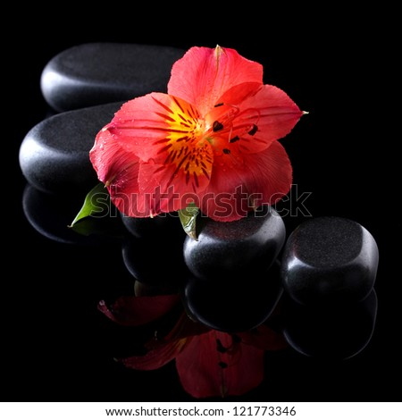 Spa stones and red flower on black background - stock photo