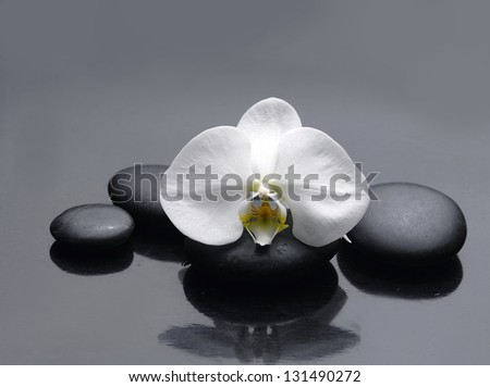 Spa Stones and single white orchid