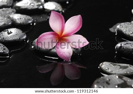 Spa stones with drops and pink frangipani