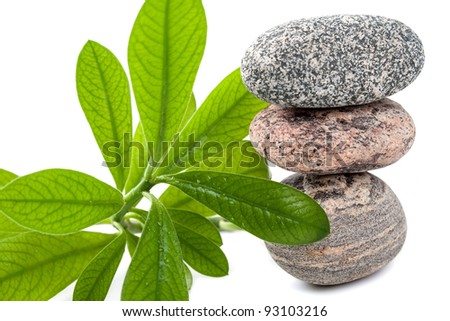 Spa stones with green plant on white