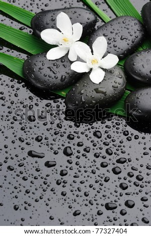 spa stones with water drops and flower  on black - stock photo