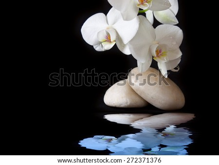 Spa treatment massage stones, with white orchid.Isolated on black background.Water reflection. - stock photo