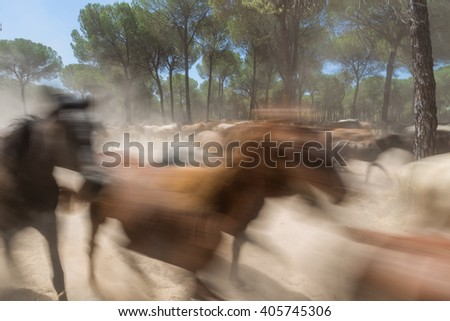 Spanish horses in El Rocio. Blurred images in motion. - stock photo