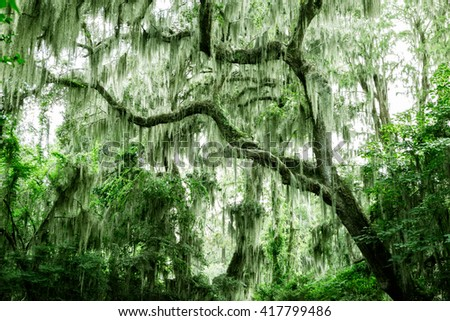 Spanish moss dangling from trees with desaturated colorized filtered effect - stock photo