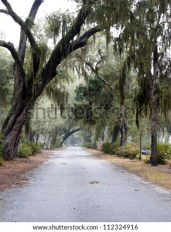 Spanish moss hangs over the road through a historic southern cemetery
