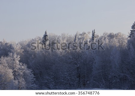 Sparkling snow on a sunny day in winter forest - stock photo