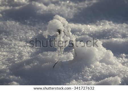 Sparkling snow with frosted dry grass. - stock photo