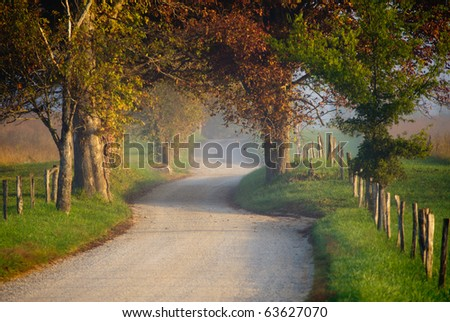 Sparks Lane with trees and fog - stock photo