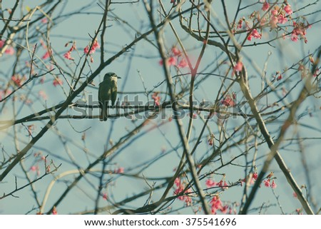 sparrow bird on the cheery blossom tree ,vintage effect - stock photo