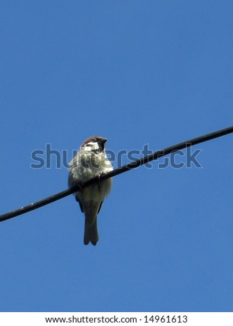 Sparrow is sitting in wire - stock photo