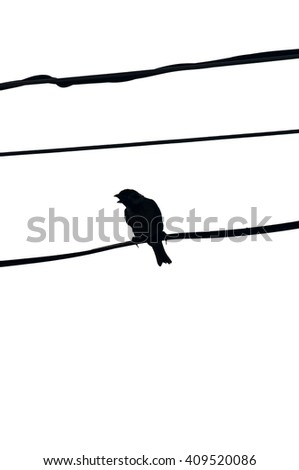 Sparrow on a wire silhouette. Back-light. - stock photo