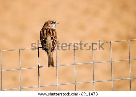 Sparrow on the wire fence with sand background - stock photo