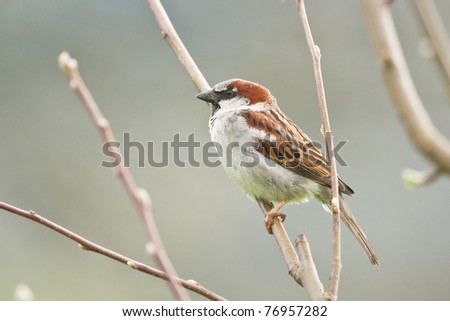 sparrow on tree close up