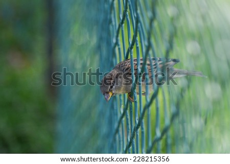 Sparrow on wire fence - stock photo