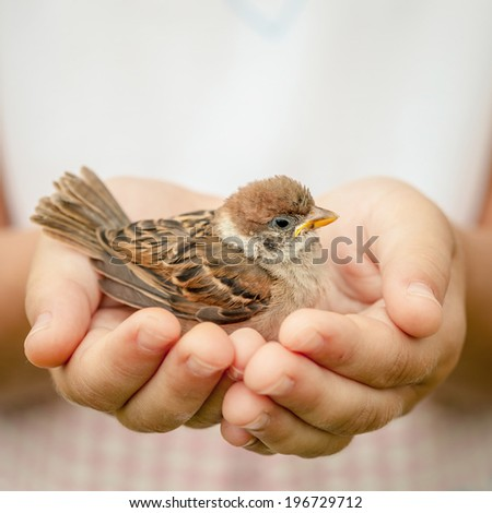 sparrow sitting in children`s hand - stock photo