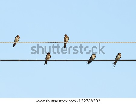 sparrow sitting on the power cable with sky - stock photo