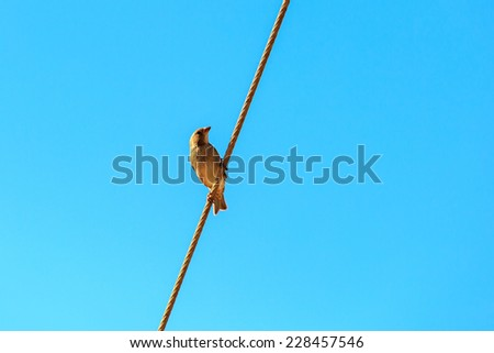 Sparrow sitting on wires - stock photo