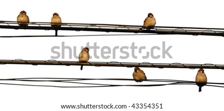 sparrows on wires - stock photo