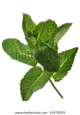 Spearmint bunch leaf on wood table