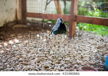 Speckled bird in a cage - stock photo