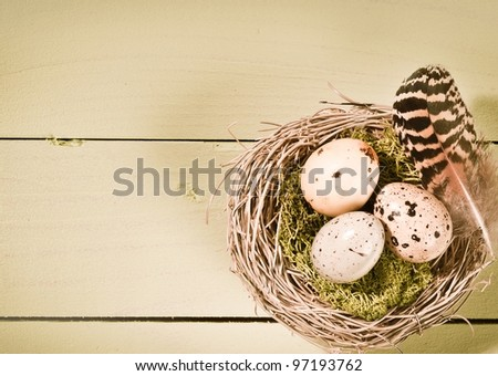 Speckled bird's eggs and a striped feather on moss in a nest of woven twigs on wooden boards - stock photo