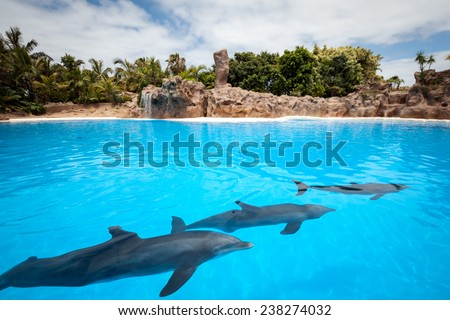 Speech dolphins Canary Islands. Tenerife, Spain. - stock photo