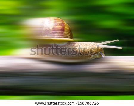 Speed snail - photo manipulation - stock photo