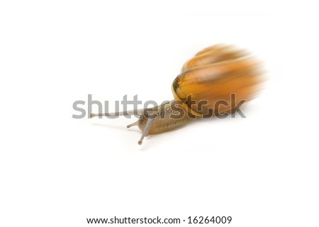 Speedy snail - stock photo