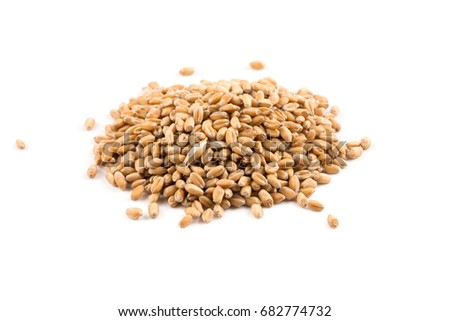 Spelt grain (dinkel wheat) isolated on white background