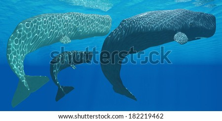 Sperm Whales - A mother Sperm whale with calf is visited by an interested male. - stock photo