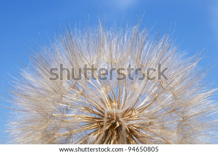 Sphere of a dandelion against the dark blue sky close up - stock photo