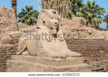 Sphinx stuatue of the sphinx alley of the Luxor Temple, a large Ancient Egyptian temple, East Bank of the Nile, Egypt. UNESCO World Heritage