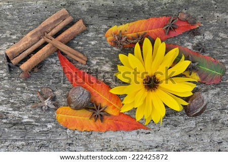 spices on wooden board with colorful leaves and flower