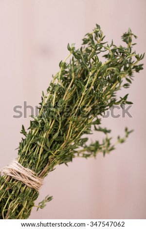 Spicy seasoning pot-herbs with aromatic flavour ripe vibtant domestic green colored bunch of rosemary herb natural ingredient for healthy food closeup studio on light background, bertical picture - stock photo
