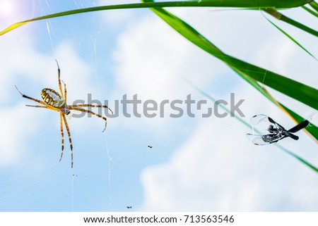 Spider and its prey on the spiderweb with blur sky background.