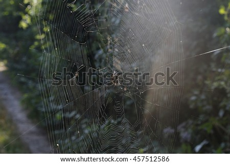 spider and prey in the network - stock photo