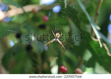 Spider and spiderweb,a spider on the spiderweb in garden - stock photo