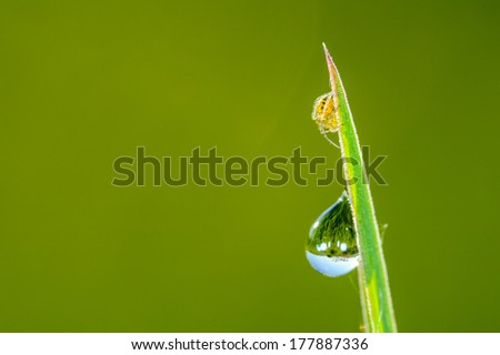 Spider and water drop on leaf